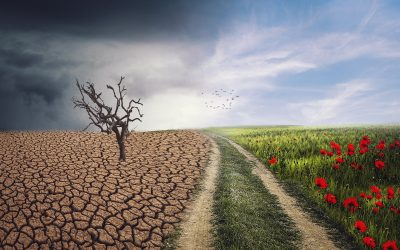 If you are tackling climate change then we can help